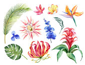 Watercolor vector set with tropical leaves and bright exotic flowers isolated on white background.