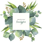 Watercolor vector square wreath with eucalyptus leaves and branches.