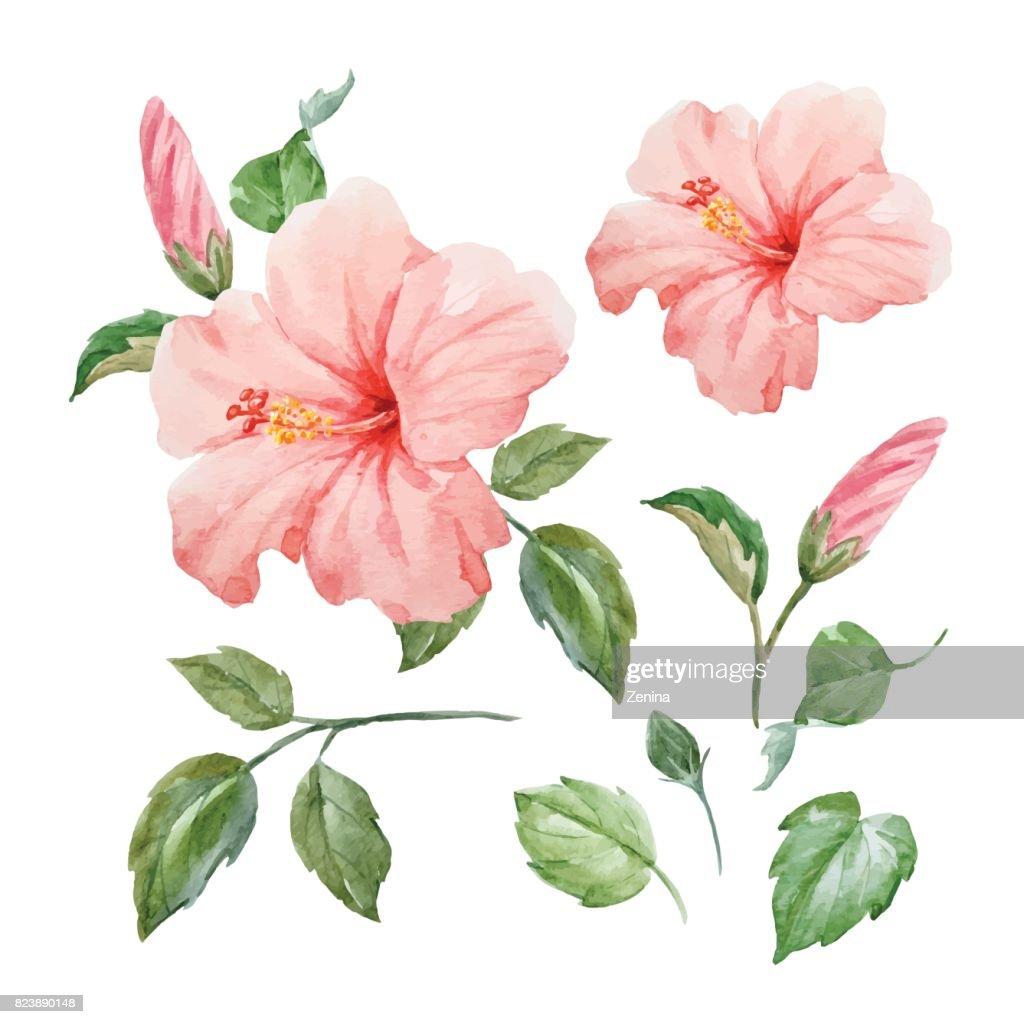 Watercolor vector tropical hibiscus flower vector art getty images watercolor vector tropical hibiscus flower vector art izmirmasajfo