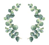 Watercolor vector wreath with silver dollar eucalyptus leaves and branches.