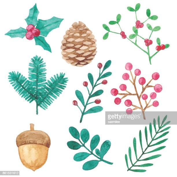 ilustraciones, imágenes clip art, dibujos animados e iconos de stock de elementos de diseño de plantas de invierno acuarela - enredadera