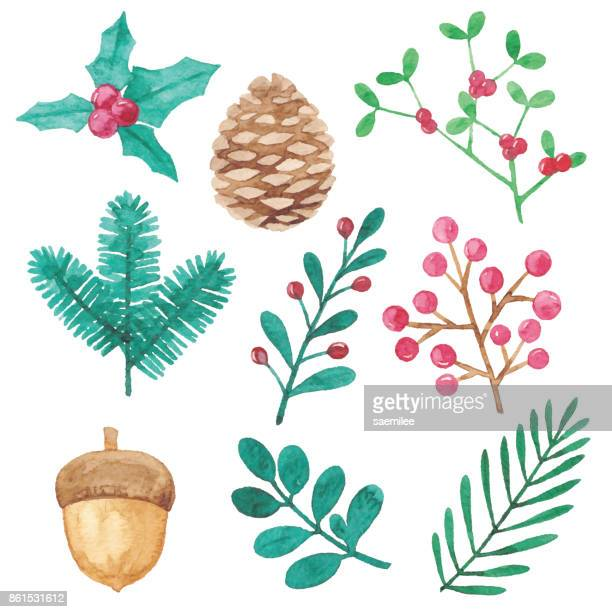 watercolor winter plants design elements - mistletoe stock illustrations, clip art, cartoons, & icons