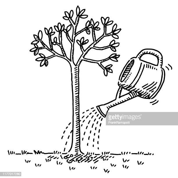watering a small tree drawing - watering can stock illustrations