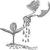 Watering Drawing