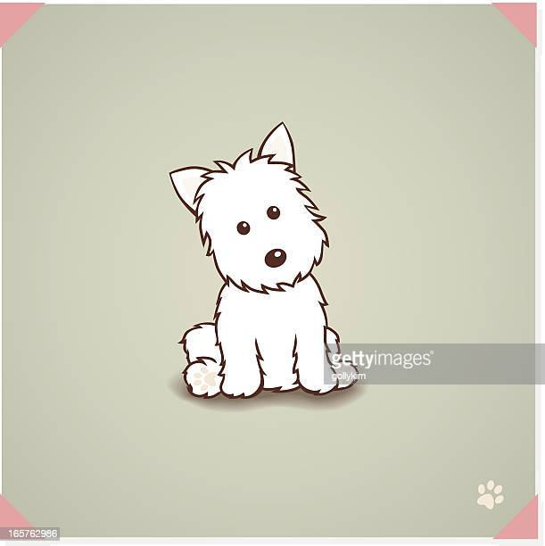 West highland terrier Dog