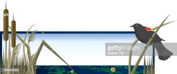 wetlands banner - mockingbird stock illustrations, clip art, cartoons, & icons