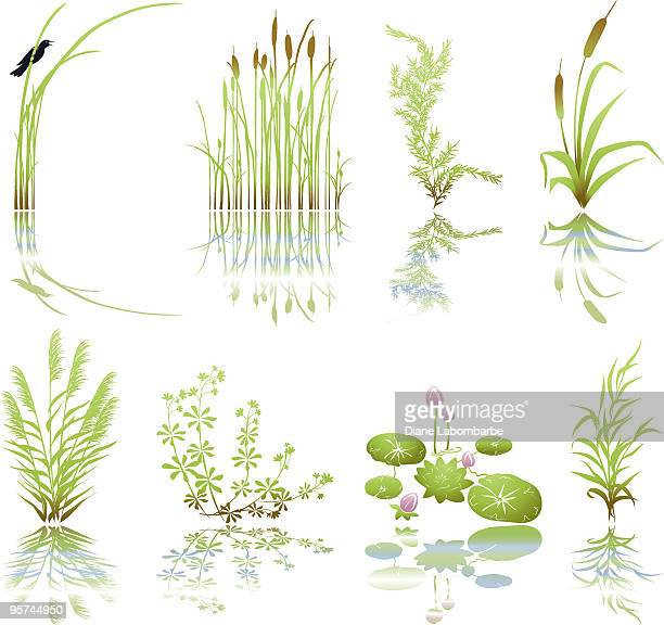 bildbanksillustrationer, clip art samt tecknat material och ikoner med wetlands icons with multiple marsh elements including their shadows - sumpmark