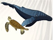 Whale and Sea Turtle