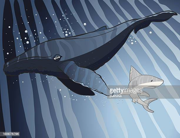whale and shark - blue whale stock illustrations, clip art, cartoons, & icons