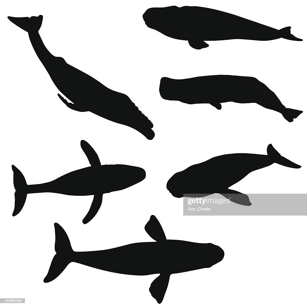 Whale silhouette collection : stock illustration