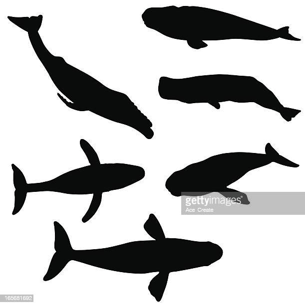 illustrations, cliparts, dessins animés et icônes de collection de silhouette de baleine - baleine