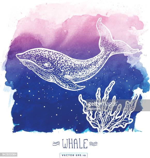 whale sketch on watercolor background - whales stock illustrations, clip art, cartoons, & icons