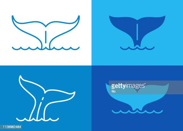 illustrations, cliparts, dessins animés et icônes de queue de baleine - baleine