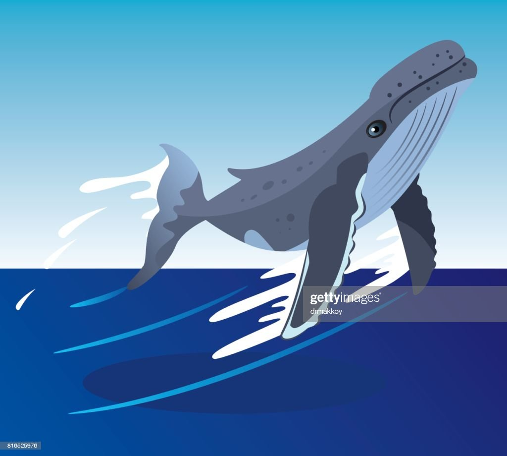 Whale : stock illustration