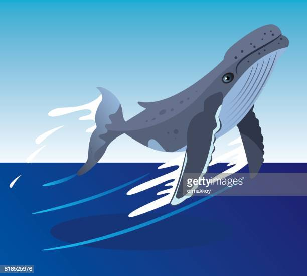 whale - killer whale stock illustrations, clip art, cartoons, & icons