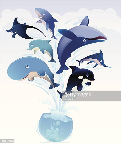 whales jumping from bowl - killer whale stock illustrations, clip art, cartoons, & icons