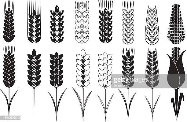wheat and corn - barley stock illustrations, clip art, cartoons, & icons