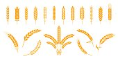 Wheat and rye ears. Barley rice grains and elements for bear logo or organic agricultural food. Vector isolated heraldic shapes