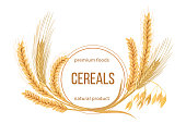 Wheat, barley, oat and rye set. Four cereals spikelets with ears, sheaf and text premium foods, natural product
