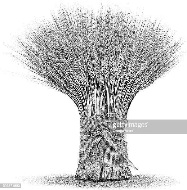 Weizen-Bundle