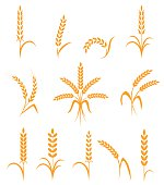 Wheat ears or rice icons set. Agricultural symbols isolated on