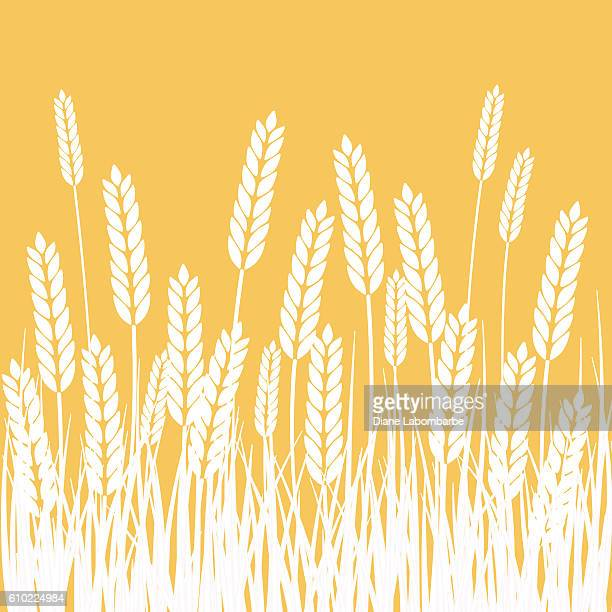 Wheat Field and Sun Agriculture background