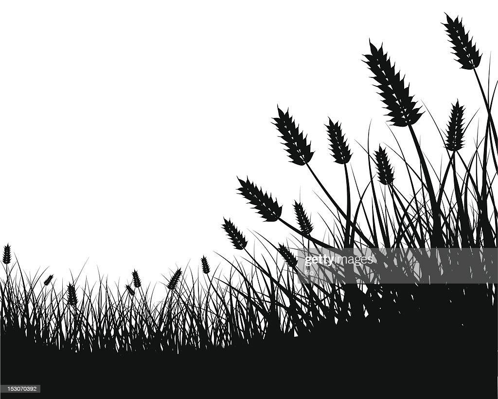 Wheat Field Frame : Stock Illustration