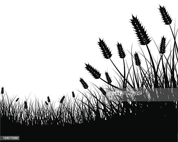 wheat field frame - field stock illustrations, clip art, cartoons, & icons