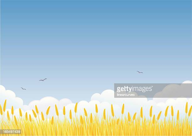 wheat field - field stock illustrations, clip art, cartoons, & icons