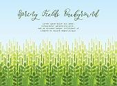 Wheat grain background. Spring agro pattern
