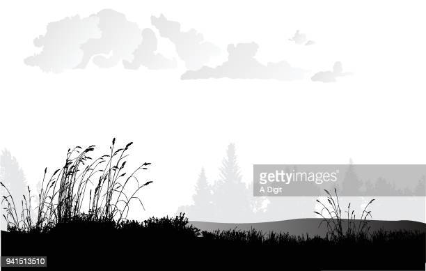 wheat grass plains - gras stock illustrations