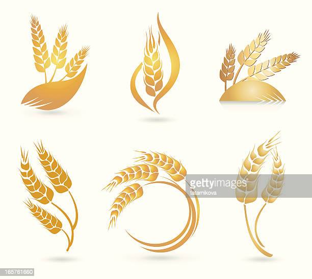 wheat logos - barley stock illustrations, clip art, cartoons, & icons