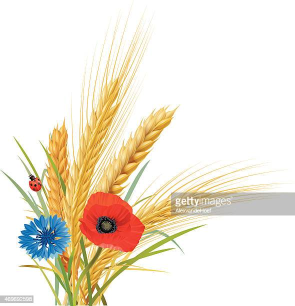 wheat, oat and barley with cornflower, poppy and ladybug - bran stock illustrations, clip art, cartoons, & icons