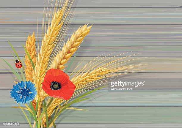 wheat oat barley with cornflower poppy and ladybug wooden wall - bran stock illustrations, clip art, cartoons, & icons
