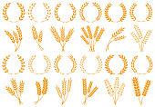 Wheat or barley ears. Harvest wheat grain, growth rice stalk and bread grains isolated vector set