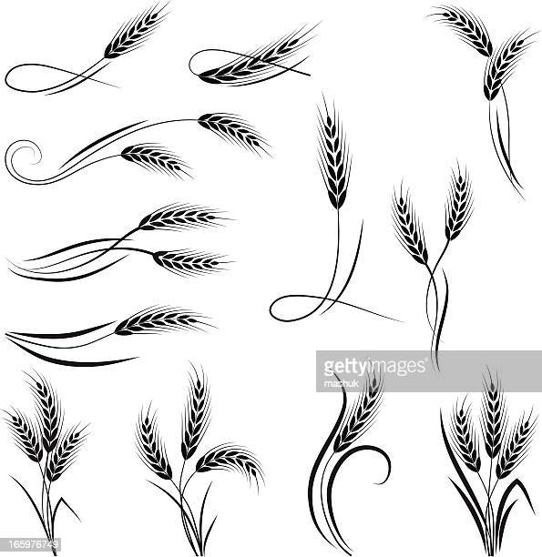 wheat ornament - wheat stock illustrations