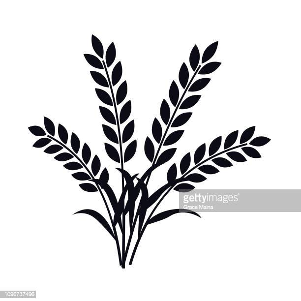 wheat plant ears - vector - cereal plant stock illustrations