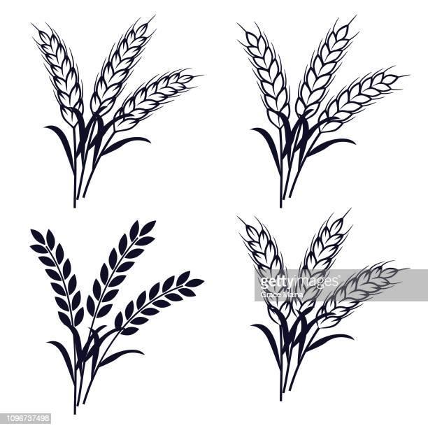 wheat plant ears - vector - bran stock illustrations, clip art, cartoons, & icons