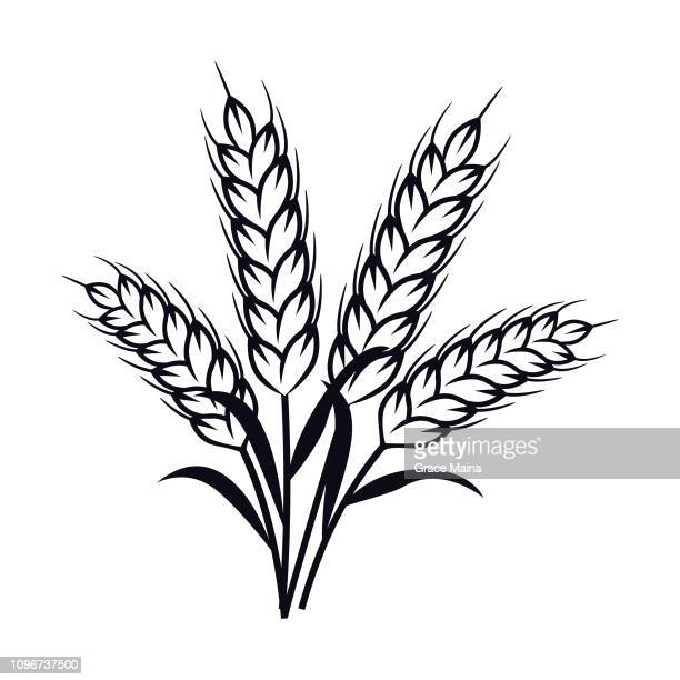 ilustraciones, imágenes clip art, dibujos animados e iconos de stock de planta de espigas - vector - espiga de trigo