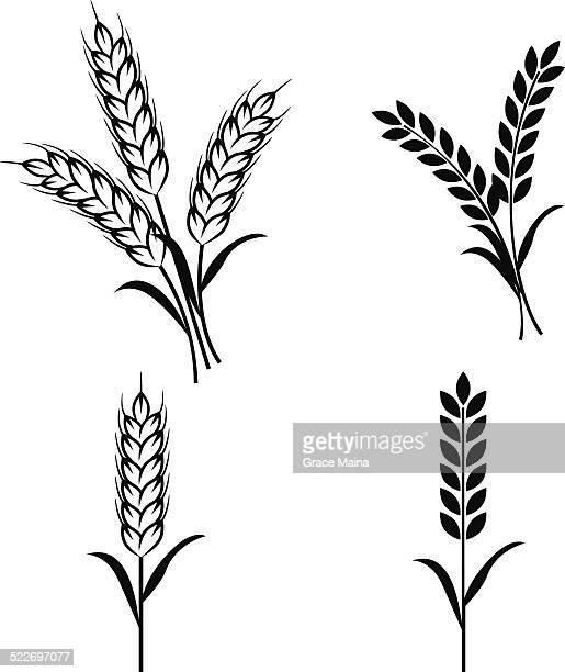 wheat plants - vector - cereal plant stock illustrations