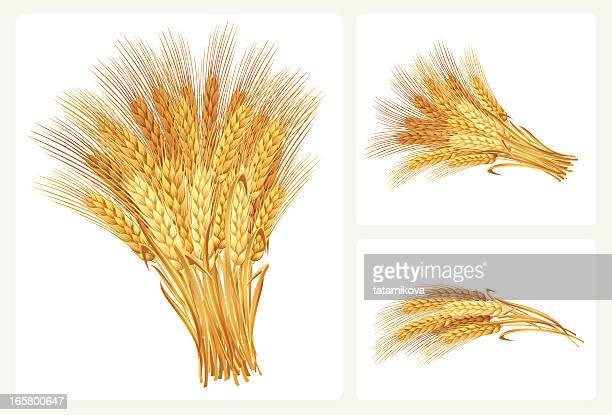 ilustrações, clipart, desenhos animados e ícones de conjunto de trigo - produto local