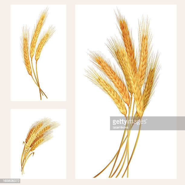 wheat set - wheat stock illustrations