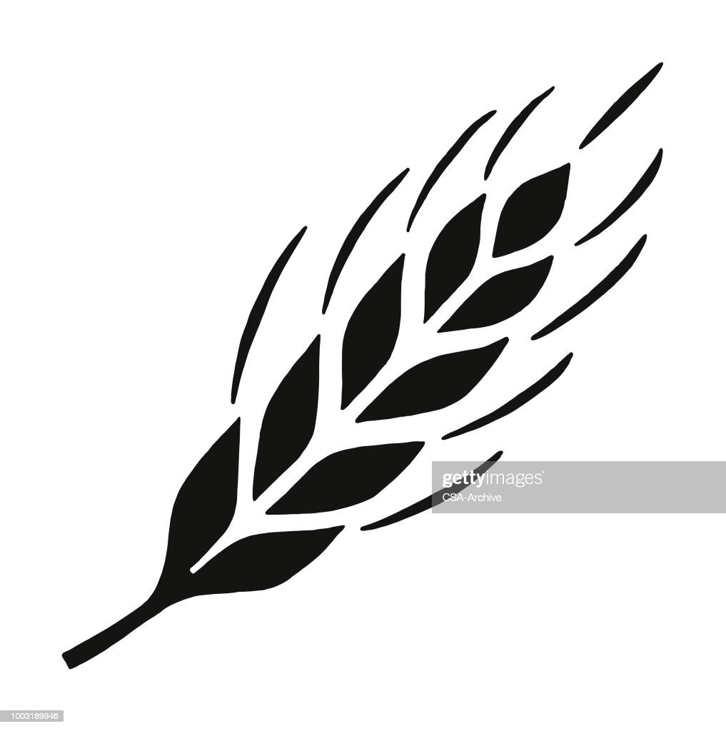 Wheat High-Res Vector Graphic - Getty Images