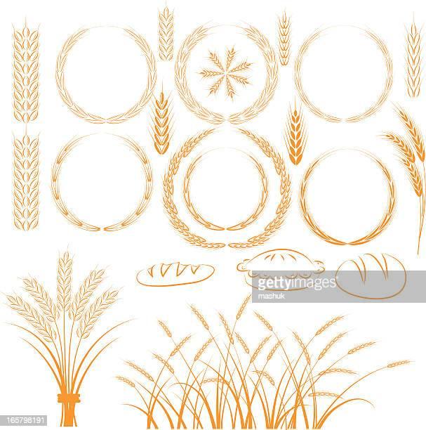 wheat - barley stock illustrations, clip art, cartoons, & icons