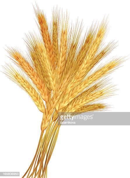 ilustrações, clipart, desenhos animados e ícones de trigo integral - produto local
