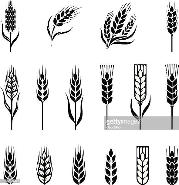 wheat - plant stem stock illustrations, clip art, cartoons, & icons