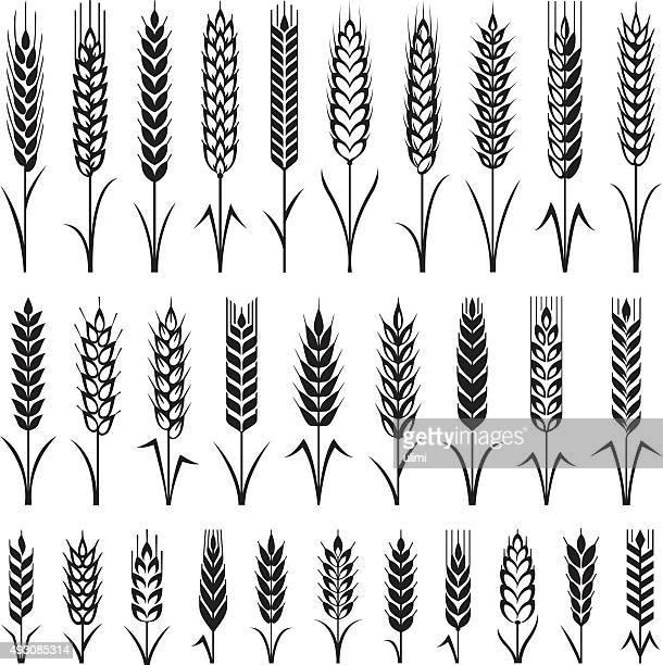 wheat - barley stock illustrations
