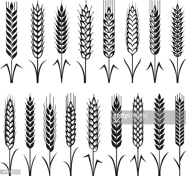 wheat - plant stem stock illustrations