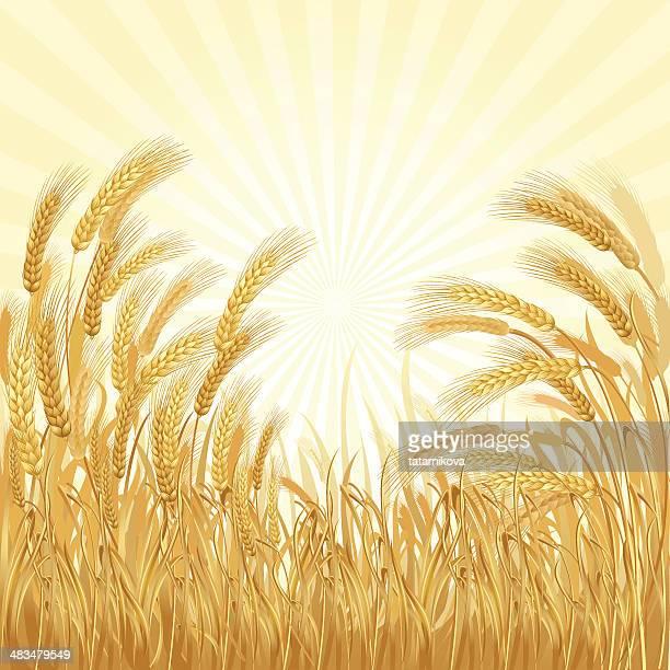 ilustrações, clipart, desenhos animados e ícones de wheatfield - produto local