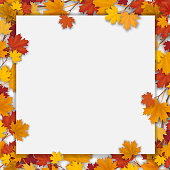 White blank with autumn maple leaves